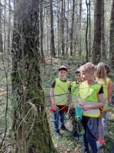 Wyjście do lasu